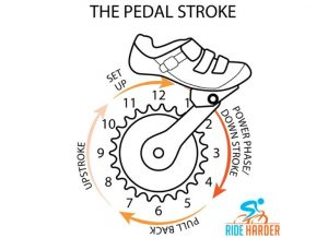 The pedal stroke